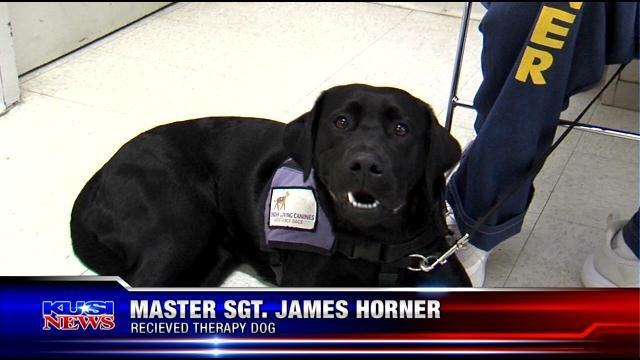 Dog trained by prison inmates given to local marine