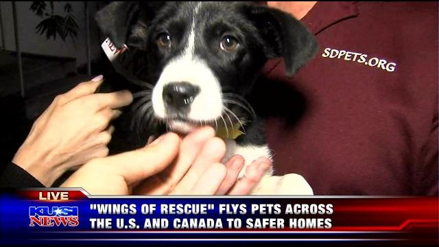 'Wings of Rescue' flies pets across the U.S. and Canada to safer homes