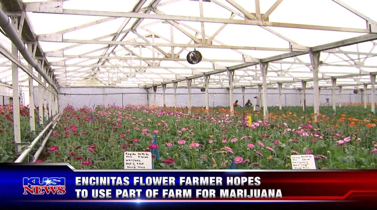 Encinitas flower farmer hopes to use part of farm for marijuana