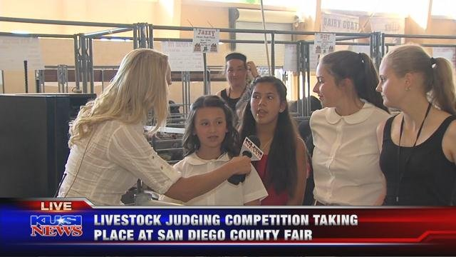 Livestock judging competition begins at the Del Mar Fairgrounds