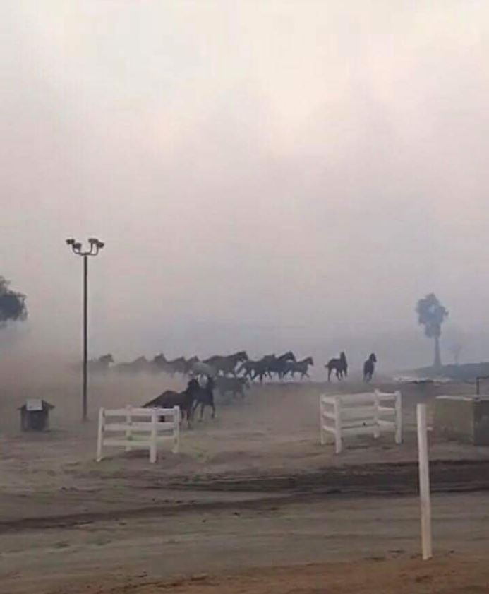 San Luis Rey Training Center in Bonsall (Twitter: @DesormeauxKent)