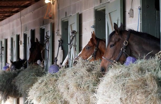 All San Luis Rey Downs horses accounted for by officials