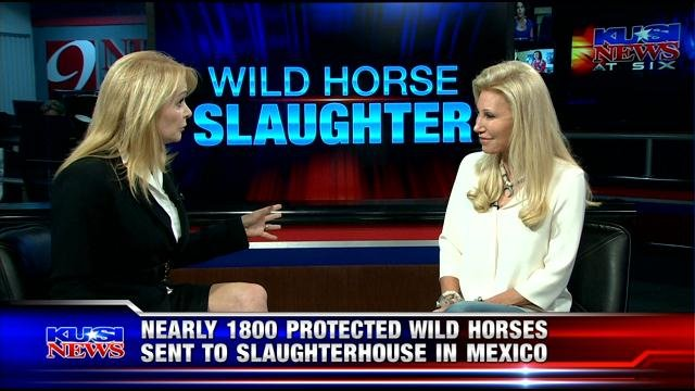 Nearly 1800 protected wild horses sent to slaughterhouse in Mexico