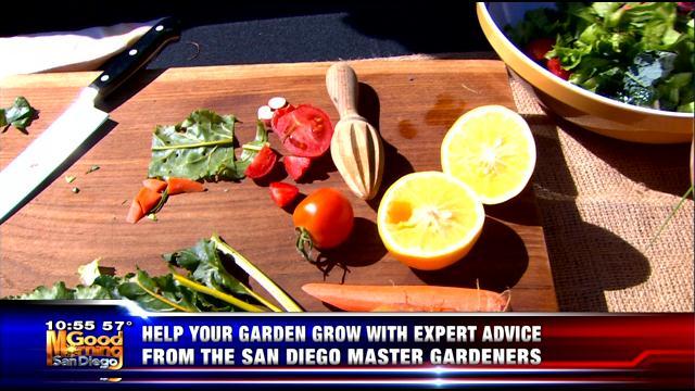 Good Morning San Diego Kusi News San Diego Ca